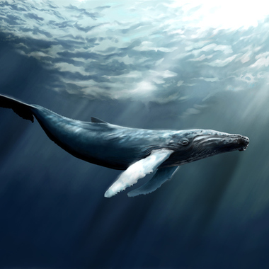 クジラと差別