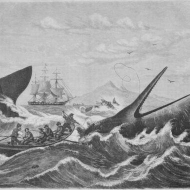 鯨食文化は野蛮なのか