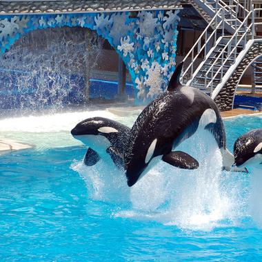 サーカスの中の鯨たち